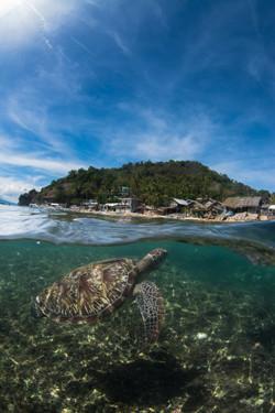 Apo Island and turtle split shot