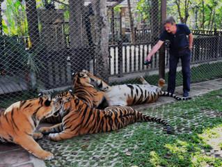 Tiger Trade Facts & Fallacies
