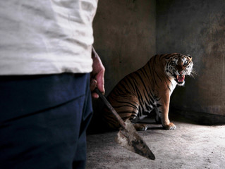 Wildlife Experts in India to probe tiger death