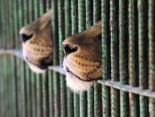 Global Conservation support secured for the campaign to terminate the canned hunting and non-conserv