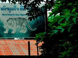 Getting to the truth behind Thailand's infamous Tiger Temple