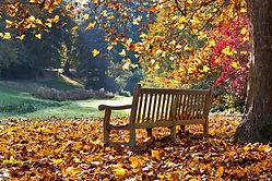 Bench in autumn park. Autumn landscape..