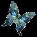 Watercolor Butterfly 20