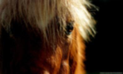 Leçons, Stages, Enseignement, Cheval & Equitation. Suisse & normandie