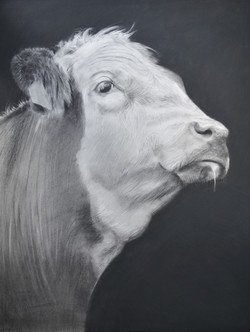 Cow XXII