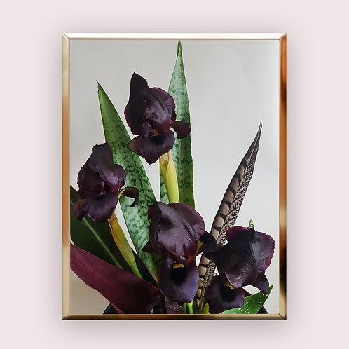 IRIS תמונת פרחים