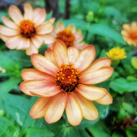 Amit Singh Orange Flowers