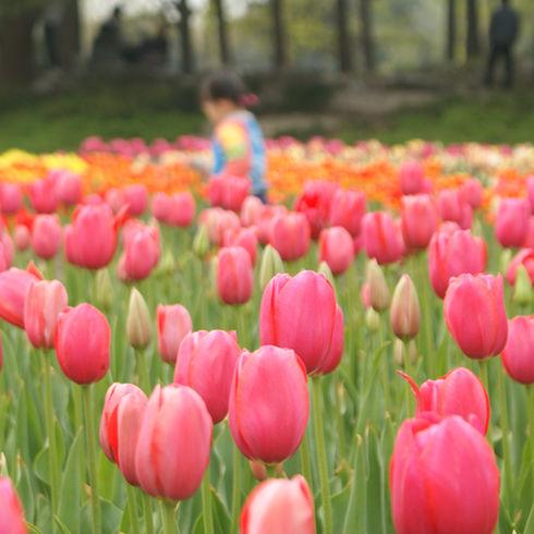 Ninda Joy Flowers #3