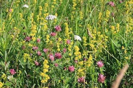 Chalk Meadow Wild Flower Seeds Mix.JPG