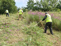 Sustrans Volunteers Learning to control weeds with Austrian Scythes.jpg