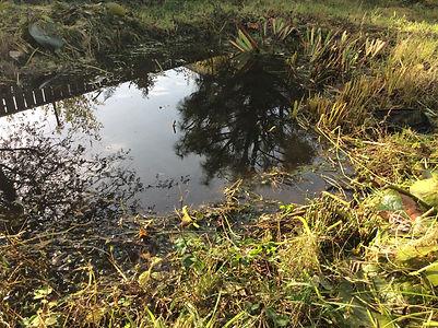 Wildlife friendly garden pond after bein
