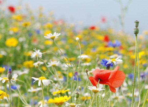 Cornfield Annual Seed Mix