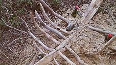 martine de jong, art, kunst, recidency, Skeleton wreck, skelet wrak