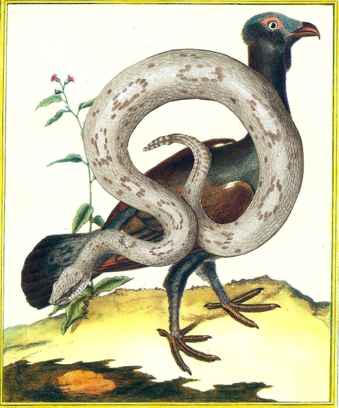 Le_Coq_de_bruyère_Le_Crotale,_Serpent_à_sonnette_-_LS_2012_(1)