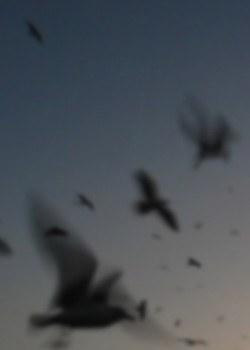 Oiseaux_Print