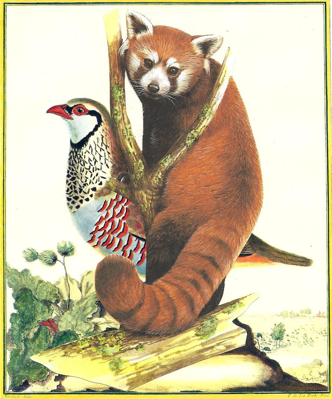 La_Perdrix_rouge_de_France,_mâle_Le_Petit_Panda_-_LS_2012