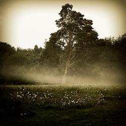 Solitude matinale 1702