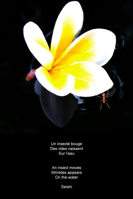 haiku-14