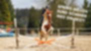 Hest-til-hjemmeside.png