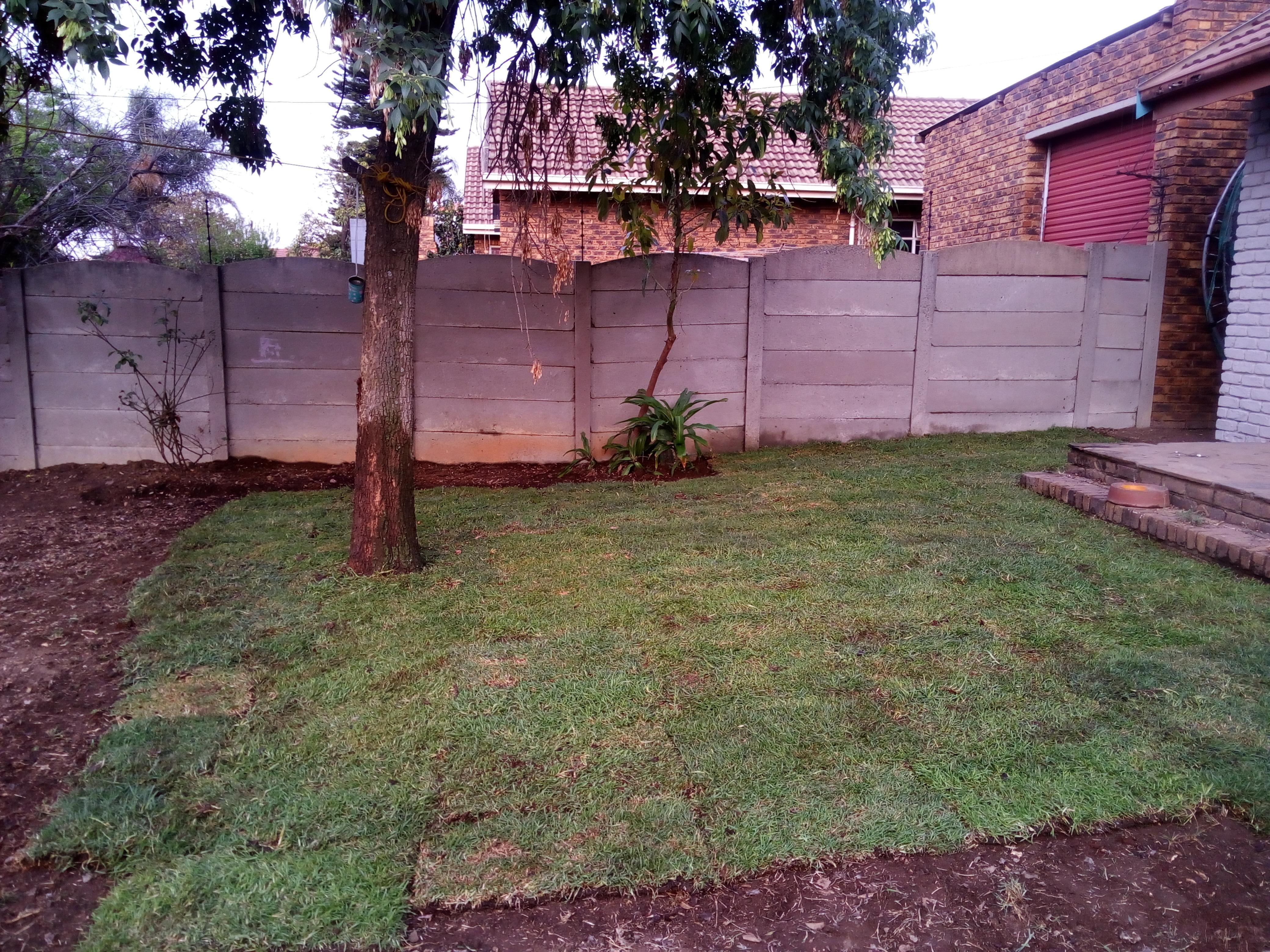 Kikuyu Lawn Installation