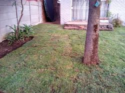 Kikuyu Grass Installatin