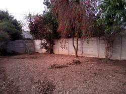 Back Garden Revamp-Before