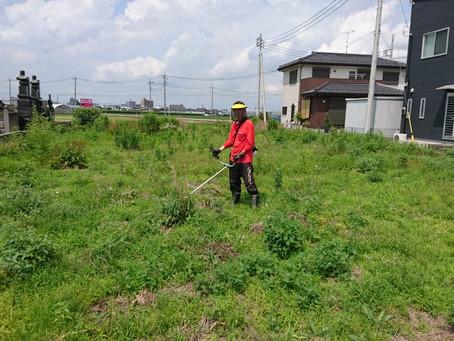 草刈り作業を助っ人しました!