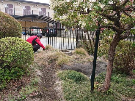 お庭の草むしりを助っ人しました!