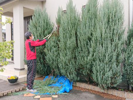 庭木の剪定を助っ人しました!