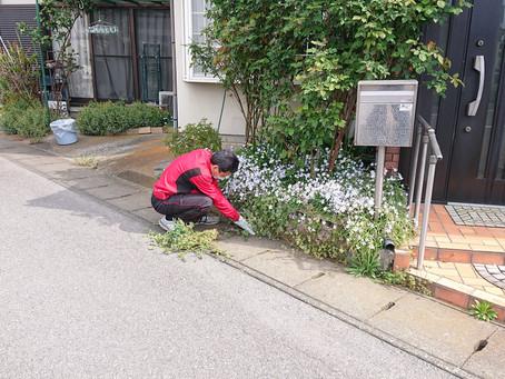 草むしりと剪定を助っ人しました!