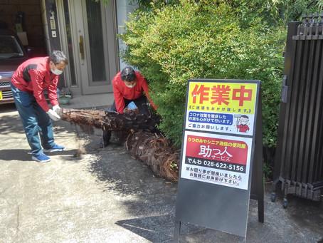 庭木大木の引取処分作業を助っ人しました!