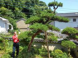 庭木の剪定作業を助っ人しました!