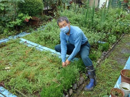 除草作業を助っ人しました!