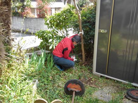 庭の剪定・伐採を助っ人しました!
