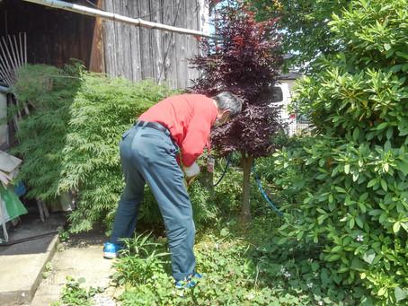 庭木剪定と移動作業を助っ人しました!