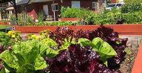 PWC Community Garden