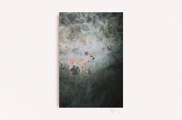 Key Deer Fawn IV