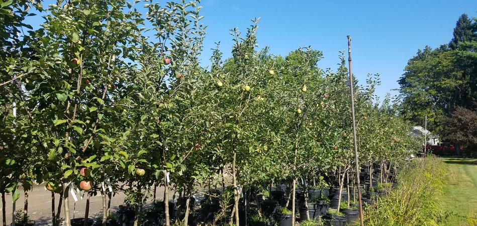 Fruit Trees