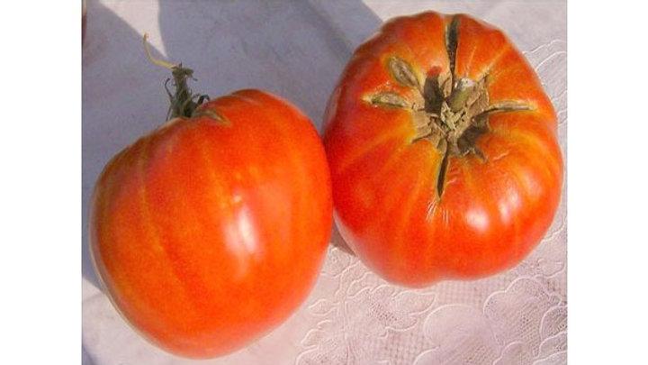 Tomato 'Delicious' DELICIOUS TOMATO