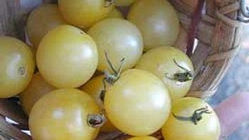 Tomato 'Snow White' SNOW WHITE TOMATO