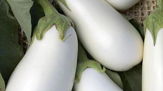Solanum melongena 'White Star' WHITE STAR EGGPLANT