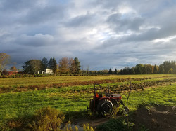 Cover Crop Rotation