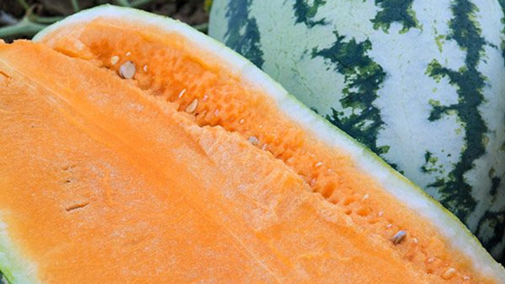 Citrullus lanatus 'Orangeglo' ORANGEGLO WATERMELON
