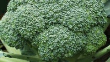 Brassica oleracea italica 'Centennial' CENTENNIAL BROCCOLI