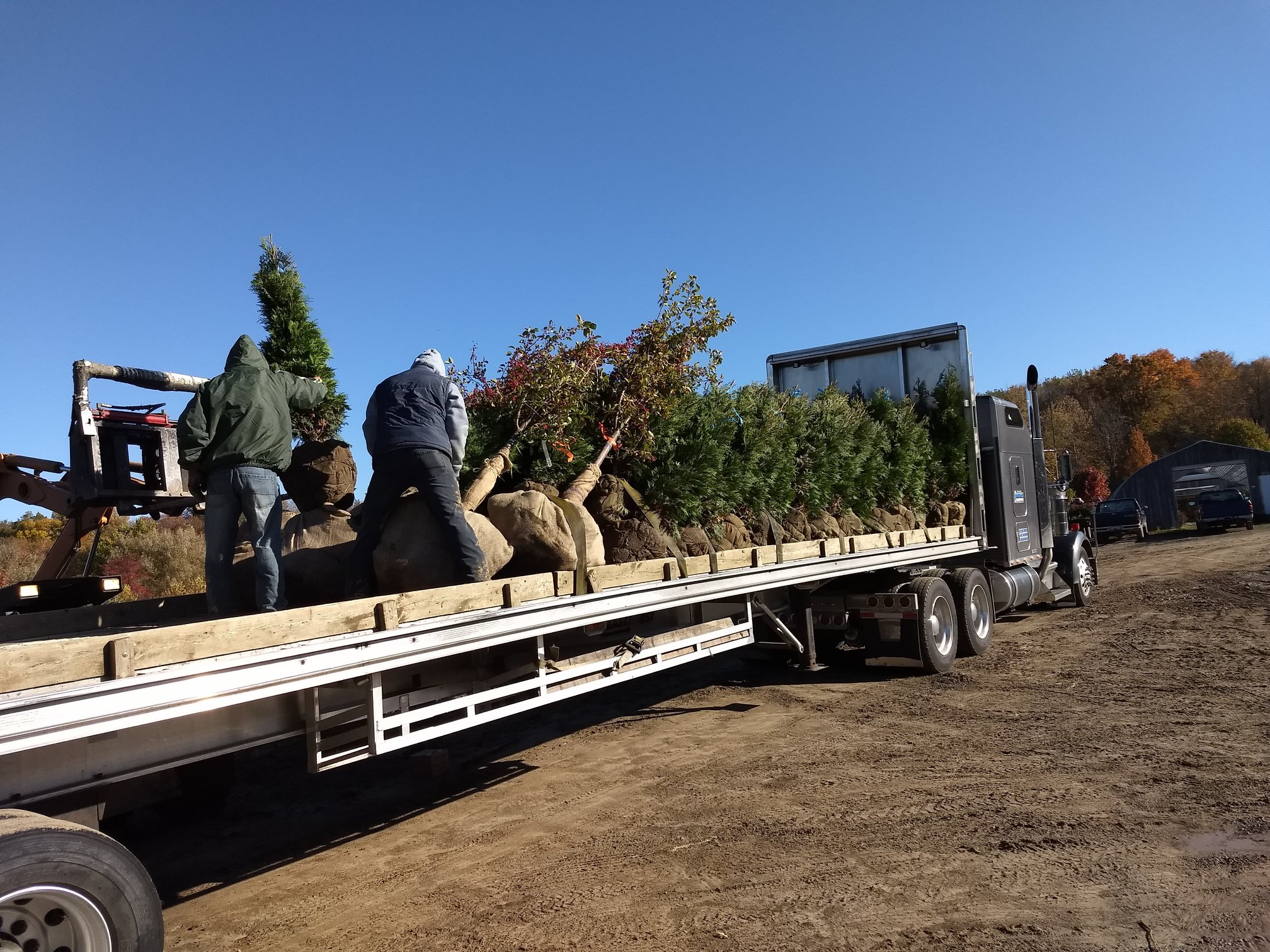 Shipping Plants By the Truck