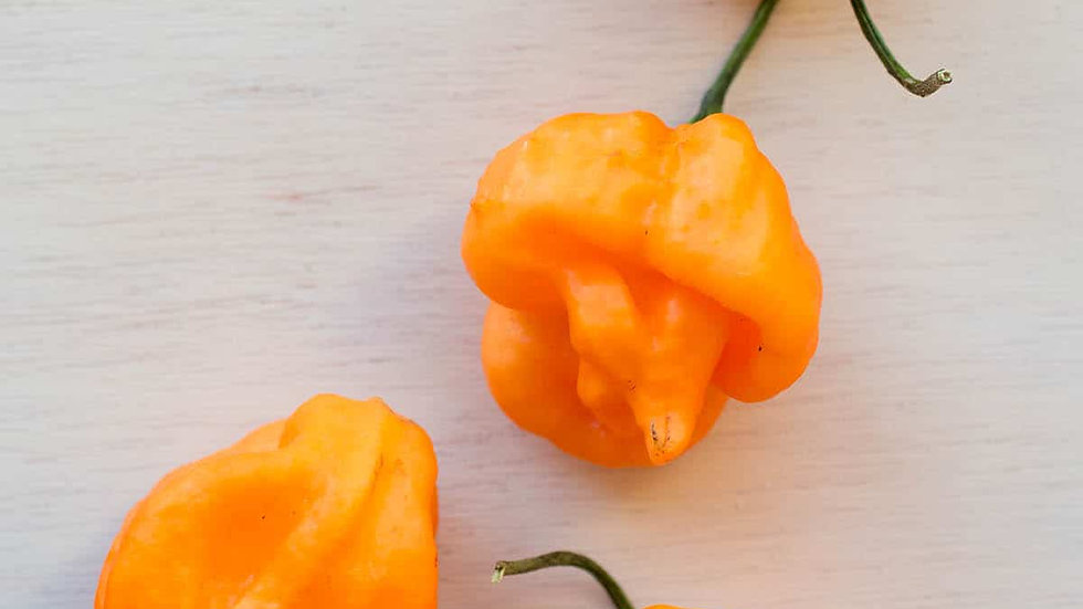 Capisicum 'Scotch Bonnet - Orange' ORANGE SCOTCH BONNET