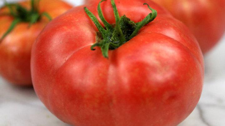 Tomato 'German Johnson' GERMAN JOHNSON POTATO LEAF TOMATO