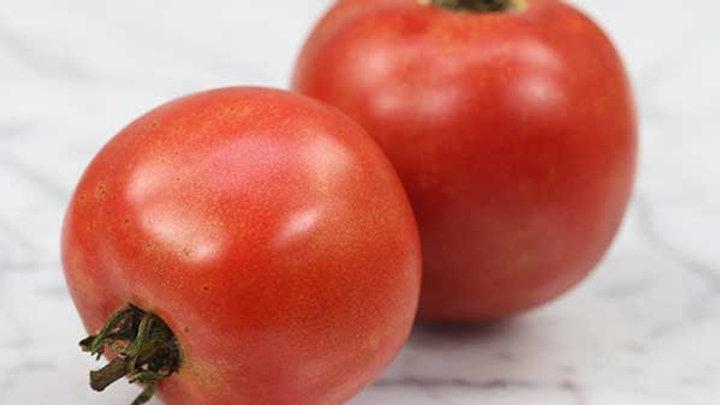 Tomato 'Arkansas Traveler' ARKANSAS TRAVELER TOMATO