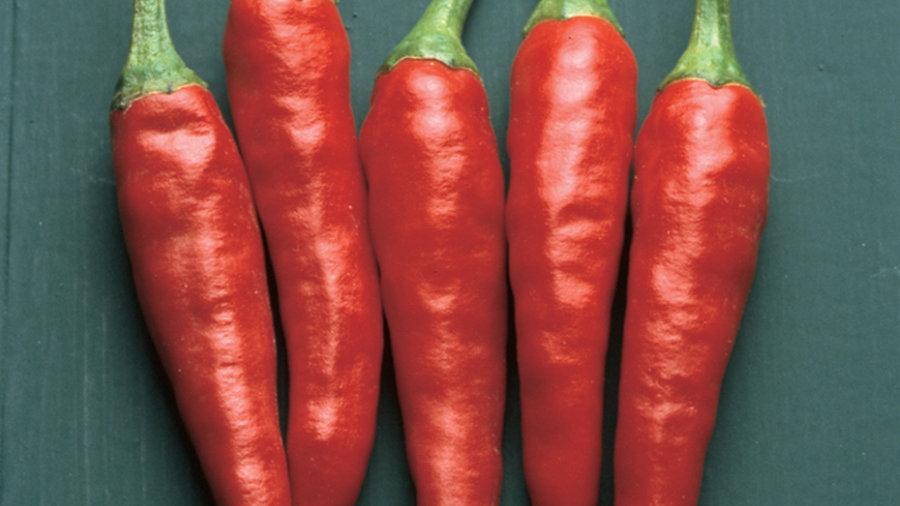 Capisicum 'Super Chili' SUPER CHILI PEPPER