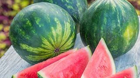 Citrullus lanatus 'Sweet Dakota Rose' SWEET DAKOTA ROSE WATERMELON